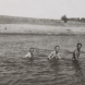 """Swimming in Canberra in 1945 oblivious of """"a large, amphibian dog-like creature""""."""