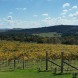 Contentious Character_view of vineyard from restaurant1_resized