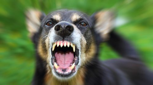 Proposed laws keep dog owners accountable