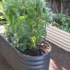 Raised vegetable beds… great for gardeners with back problems.