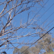 Branches of the dead tree in Lyons hang between power lines. Photo by Bryan Harris-May.