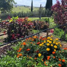 Cupitt kitchen garden