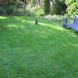 A cool lawn for the family to enjoy.