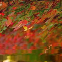 Autumn photo by Vijay Koul