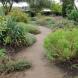 The Lambley Nursery dry garden in Victoria.