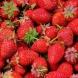 strawberries, berries, fruit,