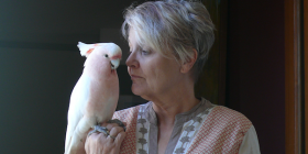 "Jan Provis and her female, Major Mitchell cockatoo named Tom, the professor's ""pet project"" to help her understand the mind of a bird. Photo by Heike Hahner"