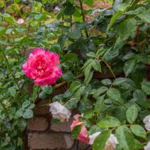 Open Garden - ALW2