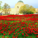 War memorial poppy display