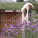 Sedums… used in northern Europe for environmentally friendly green roofs, providing the perfect insulation.